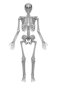 csontrendszer-betegsegei