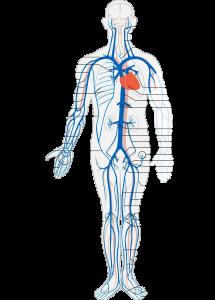 nyirokrendszer-betegsegei